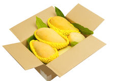 Ripped mangoes in a paper box ready to export. Stock Photos