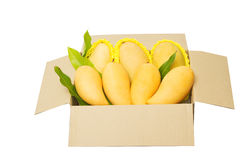 Ripped mangoes in a paper box ready to export. Royalty Free Stock Images