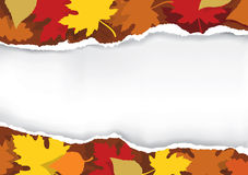 Ripped paper with autumn leaves. Stock Photos