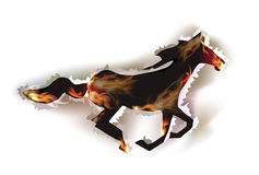 Ripped paper background, running horse Stock Photography