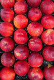 Ripped red peach in the basket selling in the marker. Fresh fruit from the organic farm. Healthy concept. Delicious juicy red peach selling the market Royalty Free Stock Photography