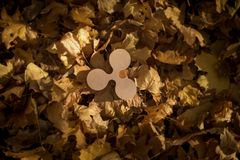 Ripple Currency Symbol on Autumn Leaves stock photo