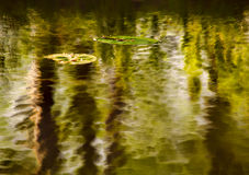 Ripple. Impressionist photo of reflection and multiple exposures of pond ripples and lily pad stock images