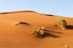 Ripple mark in the Namib Desert Stock Image