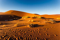 Ripple patterns and sparse brush on orange Namibian desert dunes royalty free stock images