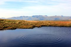 Ripple. A ripple spreads out into a lakeland tarn on a bright summer day Royalty Free Stock Photography