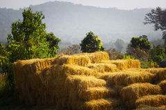 Ripple of Straw bales. At Thailand Royalty Free Stock Photography