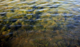 Ripple on water Royalty Free Stock Photography