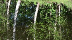 Ripple water birch tree. Ripple lake water surface and birch tree forest reflections on it stock video footage
