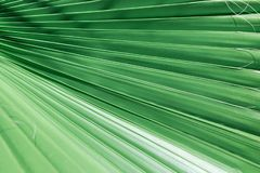 Rippled accordion pleated palm leaf with striped pattern of jungle jade green. Tropical nature background. Vacation spa wellness. Organic cosmetics theme. Copy stock photo
