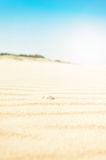 Rippled golden sand with shell Royalty Free Stock Images