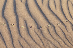Rippled sand. Stock Images