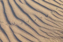 Rippled sand. Stock Photo
