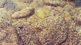 Rippled translucent pool water. Rippled clear translucent swimming pool water. Handheld. Ultra High Definition stock video footage