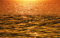 Rippled water background at sunset Stock Photography