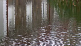 Rippled water background with white building reflection. Pond or lake water surface with green grass and white red building reflections and a few dry leaves stock footage