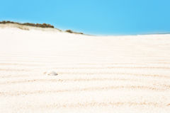 Rippled white sand with shell, horizontal Stock Photo