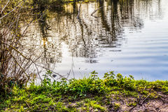 Ripples on a Lake. A view of Ripples on a Lake in the early evening Royalty Free Stock Image