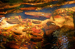 Ripples and reflections in a golden shallow creek Royalty Free Stock Image