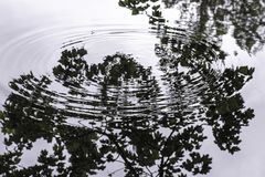 Ripples and reflections in the River Aire stock photo
