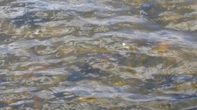 Ripples on a river stock video footage