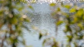 The ripples in the river water. Through blurred branches and leaves stock video