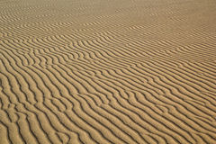 Ripples in sand. Wind swept ripples on a sand dune Royalty Free Stock Photography