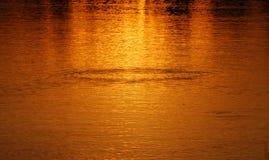 ripples solnedgång Fotografering för Bildbyråer