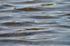 Ripples in water. Abstract of ripples on water at a local lake Royalty Free Stock Photo