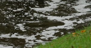 Ripples on the water with dirty foam. Polluted river. Ripples on the water with white foam stock video