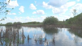 Landscape on a small pond. The ripples on the water. Dry reeds in the lake. Landscape on a small pond stock video footage