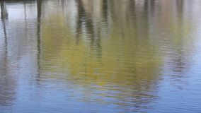Ripples water on the lake. And the reflection of trees mirrored stock video