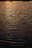 Ripples on water surface during sunset with vegetation Royalty Free Stock Images