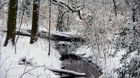 Rippling creek in the snow Royalty Free Stock Photo