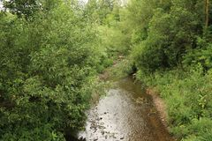Rippling stream in overgrown riverbank. A stream meandering through a dense overgrown riverbank of trees and bush's in differing shades of green and stock image