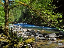 By the Rippling Waters. View along the Santiam River near Idanha, OR stock photography