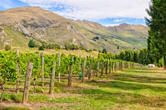Rippon Vineyard - Wanaka Stock Photos