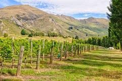 Rippon vingård - Wanaka Arkivfoton