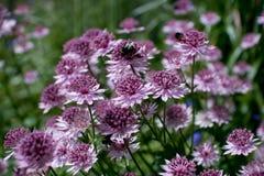 Ripponden blommor arkivfoto