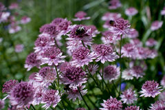Ripponden flowers Stock Photo