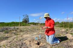 Ripristino della duna nella Gold Coast Queensland Australia Immagini Stock