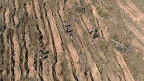 Ripristino della foresta Conservazione di ecologia Fucilazione aerea video d archivio