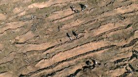 Ripristino della foresta Conservazione di ecologia Fucilazione aerea stock footage