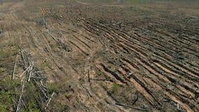 Ripristino della foresta Conservazione di ecologia Fucilazione aerea archivi video