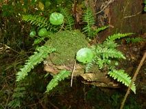 Riqueza da floresta Fotos de Stock Royalty Free