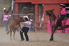 Rire de cheval Images stock