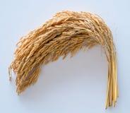 Ris Arkivbild