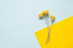 Ris av torkad immortelle på en pastellfärgad bakgrund Arkivbilder