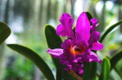 ?ris cor-de-rosa da flor fotos de stock royalty free