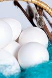 ris för fjäder för korgeaster ägg fullt Royaltyfri Foto